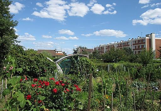Exemple de potager urbain : les jardins familiaux du parc des Hautes-Bruyères (Villejuif)