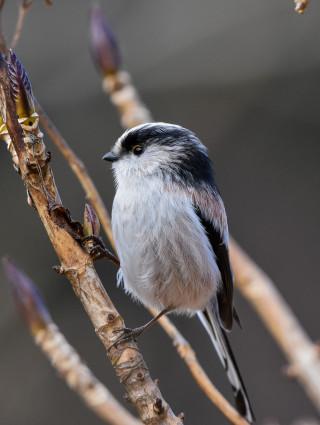 Observation des oiseaux de la forêt avec l'association Renard