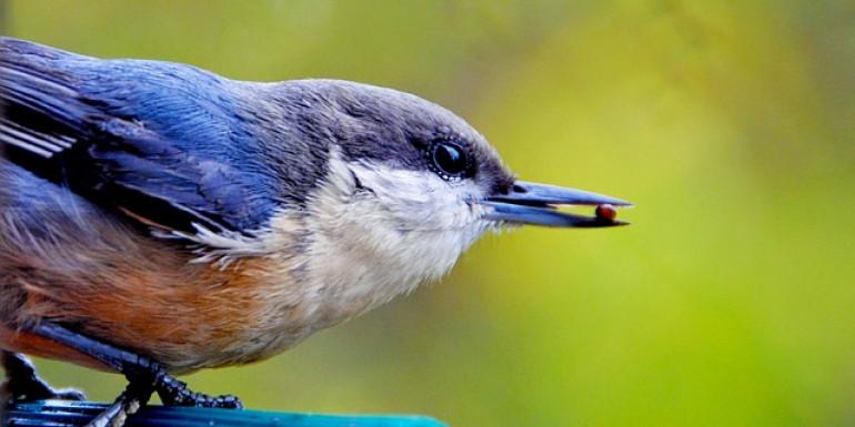 Apprenez à identifier les chants d'oiseaux du Val-de-Marne
