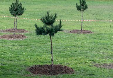 Plantations d'arbres, photo par E. Legrand