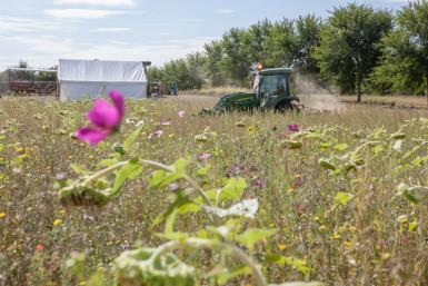 Appel à projets 2020 mise à disposition d'une parcelle en agriculture biologique au parc des Lilas