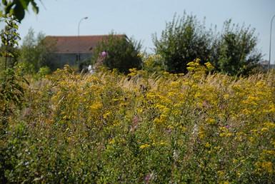 le point fort de la Plaine des Bordes est la diversité des habitats
