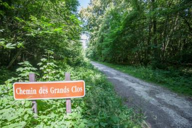 Forêt de Gros Bois au coeur de l'Arc boisé © Eric Legrand