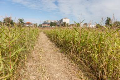 parcelle en agriculture biologique au parc des Lilas