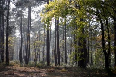 le Val-de-Marne, la Seine-et-Marne et l'Essonne. Cet espace naturel abrite de nombreuses espèces de plantes et animaux.
