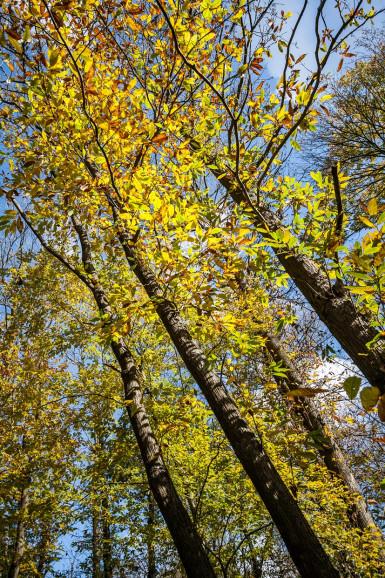 Arc boisé, forêt domaniale de la Grange à Limeil-Brévannes