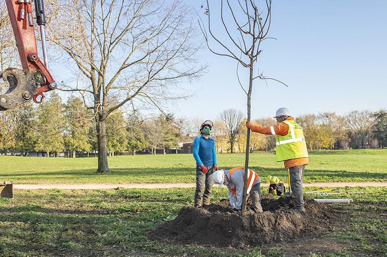 Plantation de parasols naturels au parc de la Plage bleue (Valenton)
