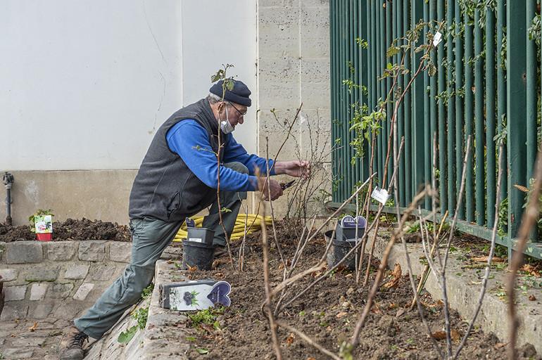 Plantation d'arbustes fruitiers au parc de la Roseraie (L'Haÿ-les-Roses)