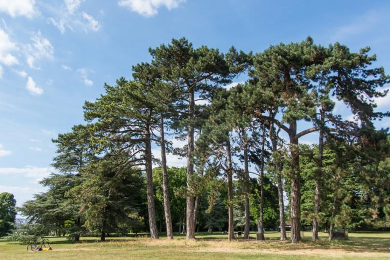 Parc départemental de la Roseraie ; © Eric Legrand