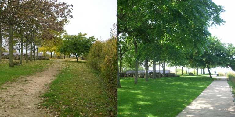 Parc du plateau - belvédère (avant : 08.11.2010 / après : 29.08.2017)