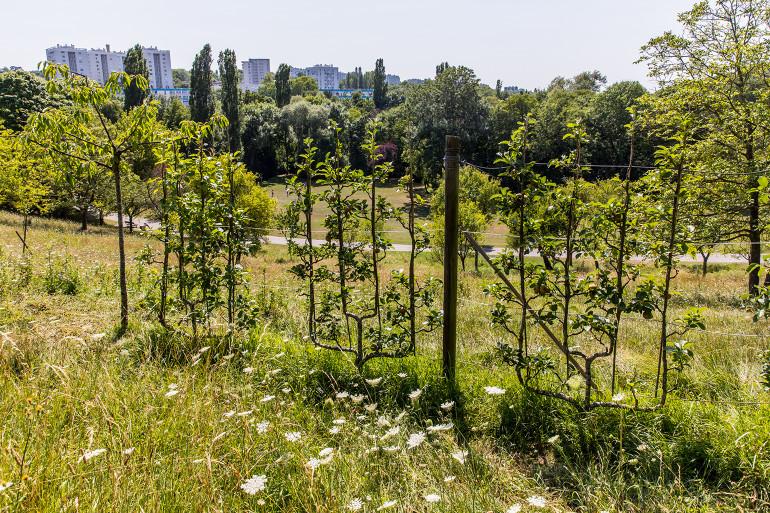 Parc départemental du Morbras ; crédit photo : Eric Legrand