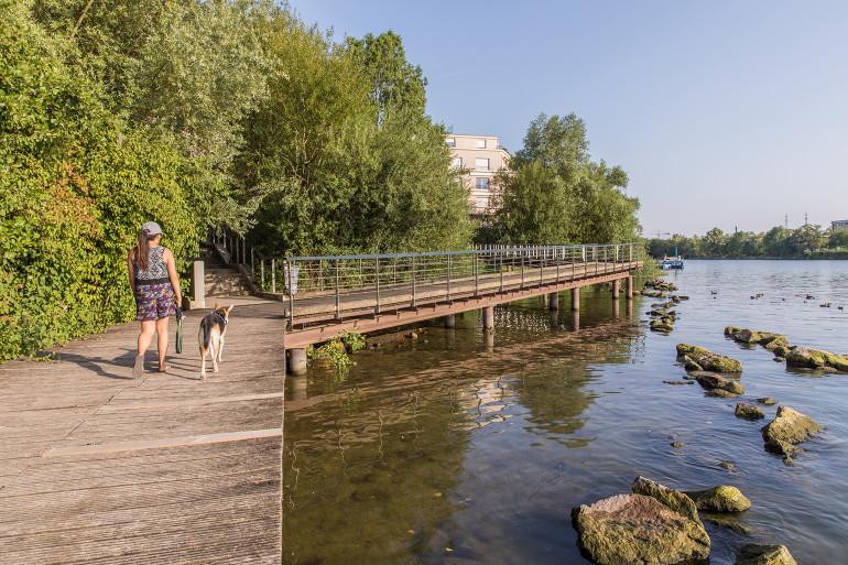 Frayère aménagée sur les bords de Seine, à Choisy-le-Roi, pour favoriser la reproduction des poissons ; crédit photo : Eric Legrand