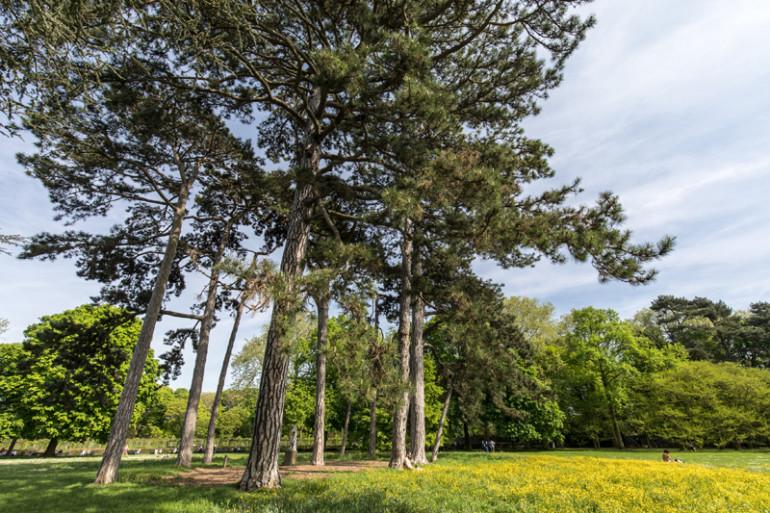 Vue du parc de la Roseraie ; crédit photo : E. Legrand