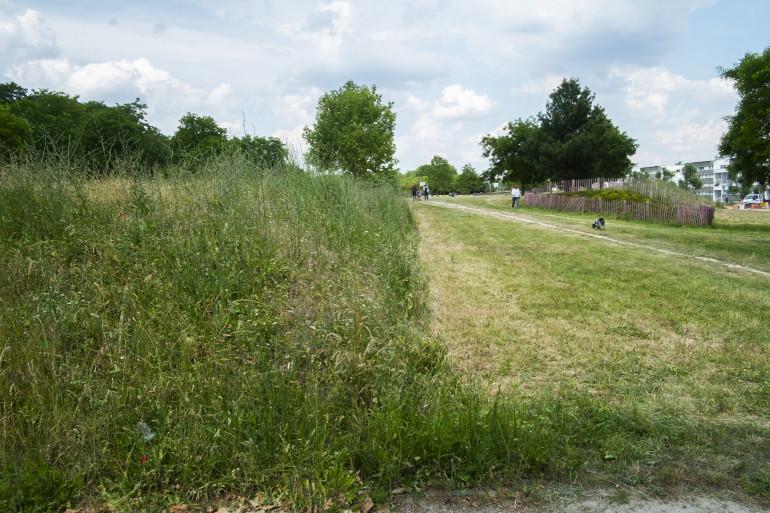 Vue du parc des Hautes-Bruyères ; crédit photo : M. Lumbroso