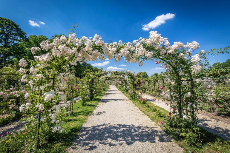 Arceaux de la roseraie du Val-de-Marne ; crédit photo : E. Legrand