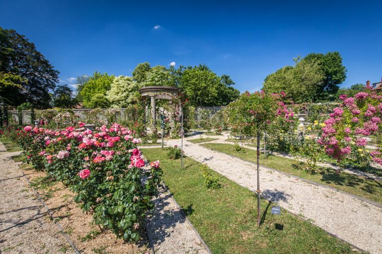 Roseraie du Val-de-Marne ; crédit photo : E. Legrand