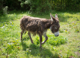Découvrez l'élevage d'ânes de la Plaine des Bordes