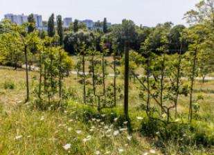 arbres fruitiers au Parc départemental du Morbras