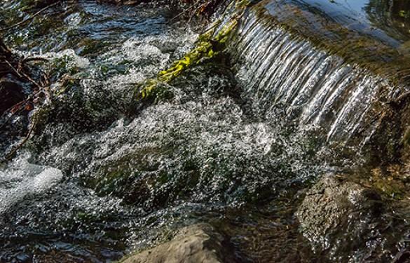 Eau, environnement, restrictions d'eau : le Reveillon à Villecresnes