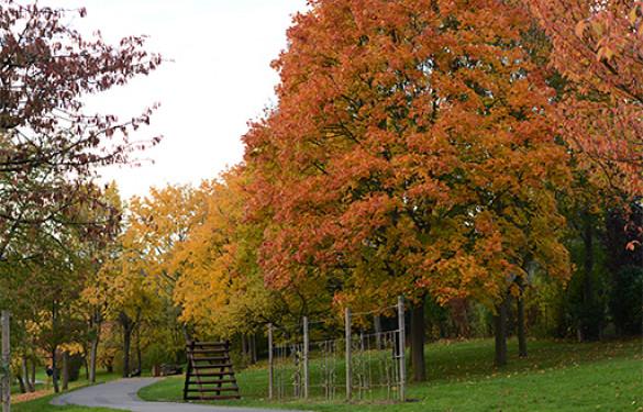 Parc du Morbras en automne (Photo : F. Carrez)