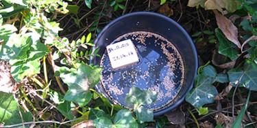 Piège pondoir pour le moustique tigre dans un parc