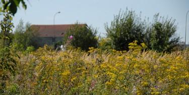 Environnement, écologie : le point fort de la Plaine des Bordes est la diversité des habitats