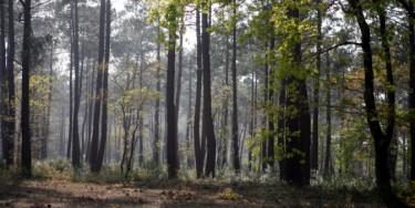 Le massif forestier de l'Arc Boisé est un massif du sud-est de l'Île-de-France. Il est constitué de la forêt de Notre-Dame, la forêt de la Grange, et la forêt de Grosbois.
