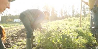 L'association de production maraichère Val Bio Ile-de-France favorise l'insertion professionnelle