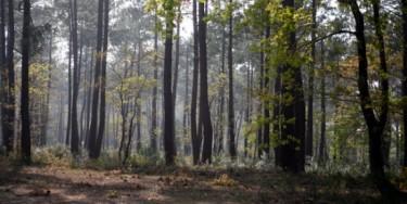L'Arc boisé est un massif forestier d'environ 3000 hectares situé sur trois départements : le Val-de-Marne, la Seine-et-Marne et l'Essonne. Cet espace naturel abrite de nombreuses espèces de plantes et animaux.