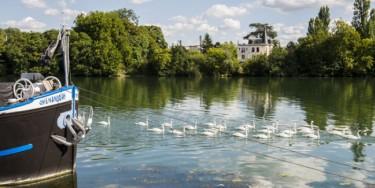 À Ablon-sur-Seine, les oiseaux trouvent des abris dans les arbres en bordure de  fleuve. Les espèces se reproduisent, nichent et se nourrissent sur les berges. © Michael Lumbroso