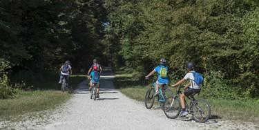 Balade à vélo dans la forêt (Photo : M. Lumbroso)