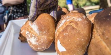 Atelier de fabrication de pain bio au parc de la Plage-Bleue ; crédit photo : E. Legrand