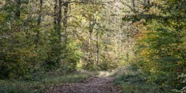 L'Arc boisé, l'habitat naturel des chauves-souris