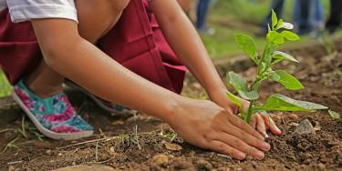 Nature, environnement : atelier jardinage au parc du Morbras