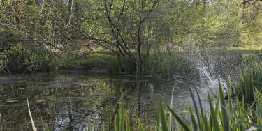 Les écosystèmes de la forêt bois Notre-Dame ; crédit photo : © Agnès Deschamps