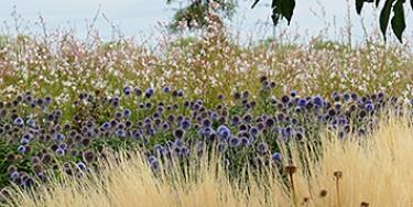 Parc de la Plage Bleue à Valenton